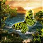 FlutterbySkies7263