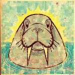wackywalrus