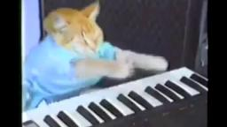 Keyboard cat (reupload on vidlii)
