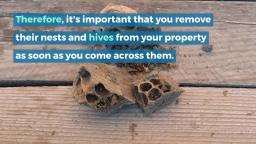 Importance of Pest Control for Homeowners