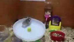 hamsterspin