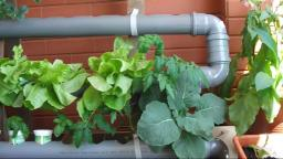 Hydroponics - Homemade Hydroponic NFT System