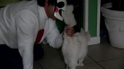 Zacharie Neko Boy Loves Cats
