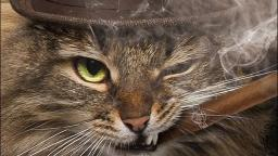 top 5 gangster cats