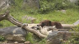 LIONS SLEEPING AND A BEAR CHILLING