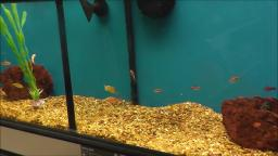 FISH AT PETCO