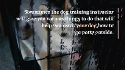 Useful Tips For a Successful Dog Training Program