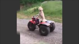 paul waker tribute with dog cruising a quadbike rip