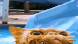 cat goes down water slide