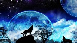 The Beauty, Majesty, and Nobility of Wolves
