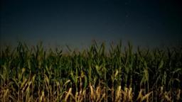 Night at The Corn Field