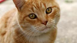 I couldnt come up with any video ideas so cat