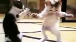 Weird Arabic Cat Dance