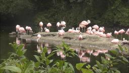 FLAMINGOS AT THE BRONX ZOO