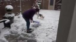 Random Insanity - Our dog loves snow