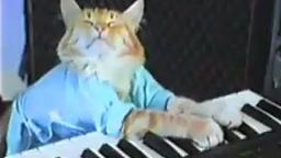 Charlie Schmidts Keyboard Cat!