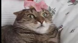 Cat Cant Handle Flower