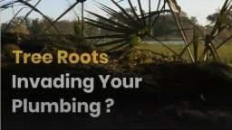 Tree Roots Invading Your Plumbing
