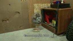 smash a vintage 16 inch desk fan