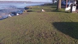 19 January 2020 At Manningtree Essex Weather Share video nice sunny day today