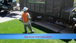 Commercial Tree Service San Jose - Bay Area Tree Specialists (408) 836-9147